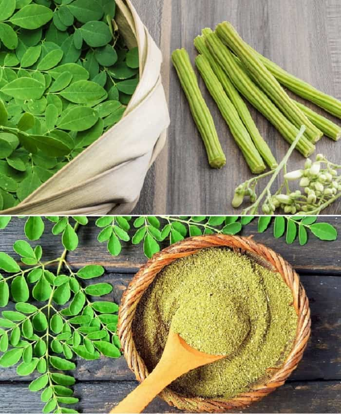 moringa can cure herpes