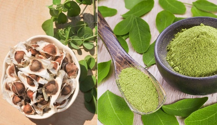 moringa seeds can cure diseases