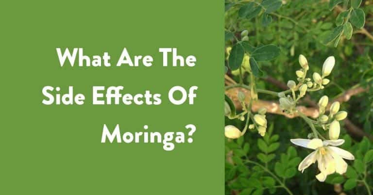 what are the side effects of moringa