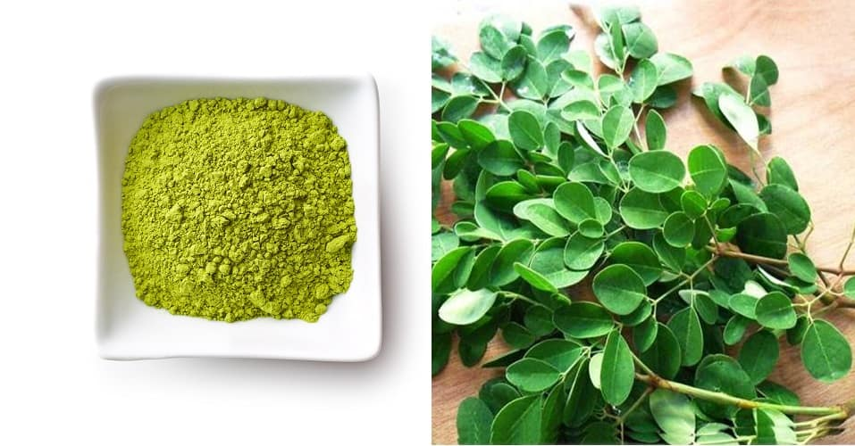 moringa cures diseases